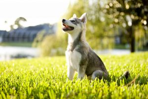 Protect your home and your pet with an invisible pet fence!