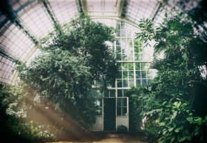 Building a Greenhouse for Your Next Home Improvement Project