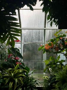 Exciting Additions: Create a Backyard Oasis with a Greenhouse or Sunroom
